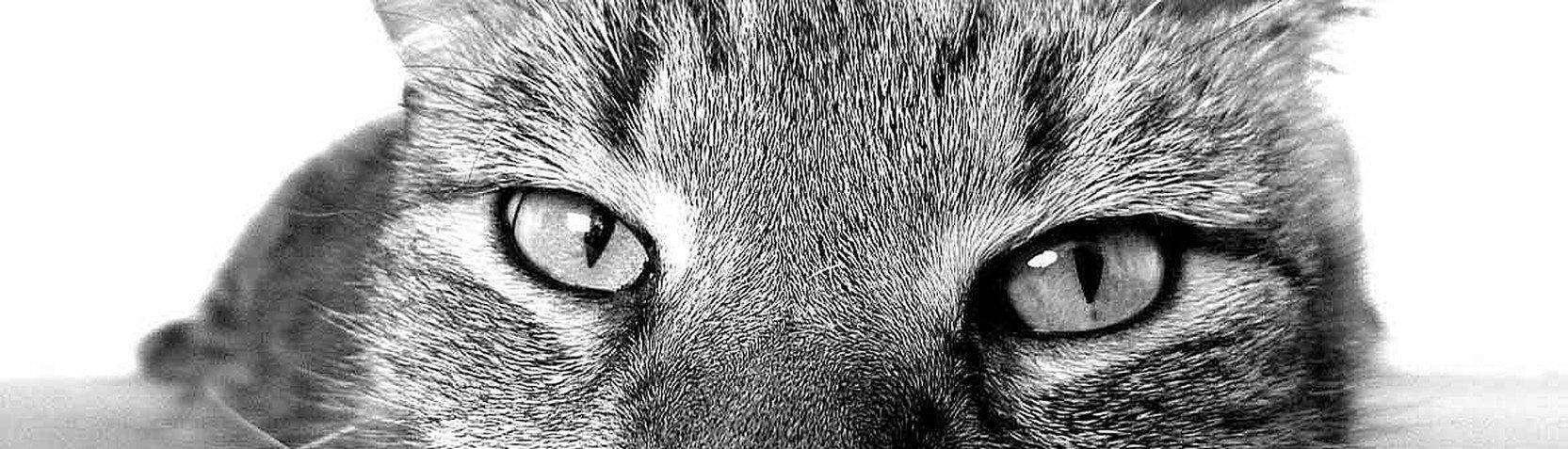 Fotografie - Tierfotografie